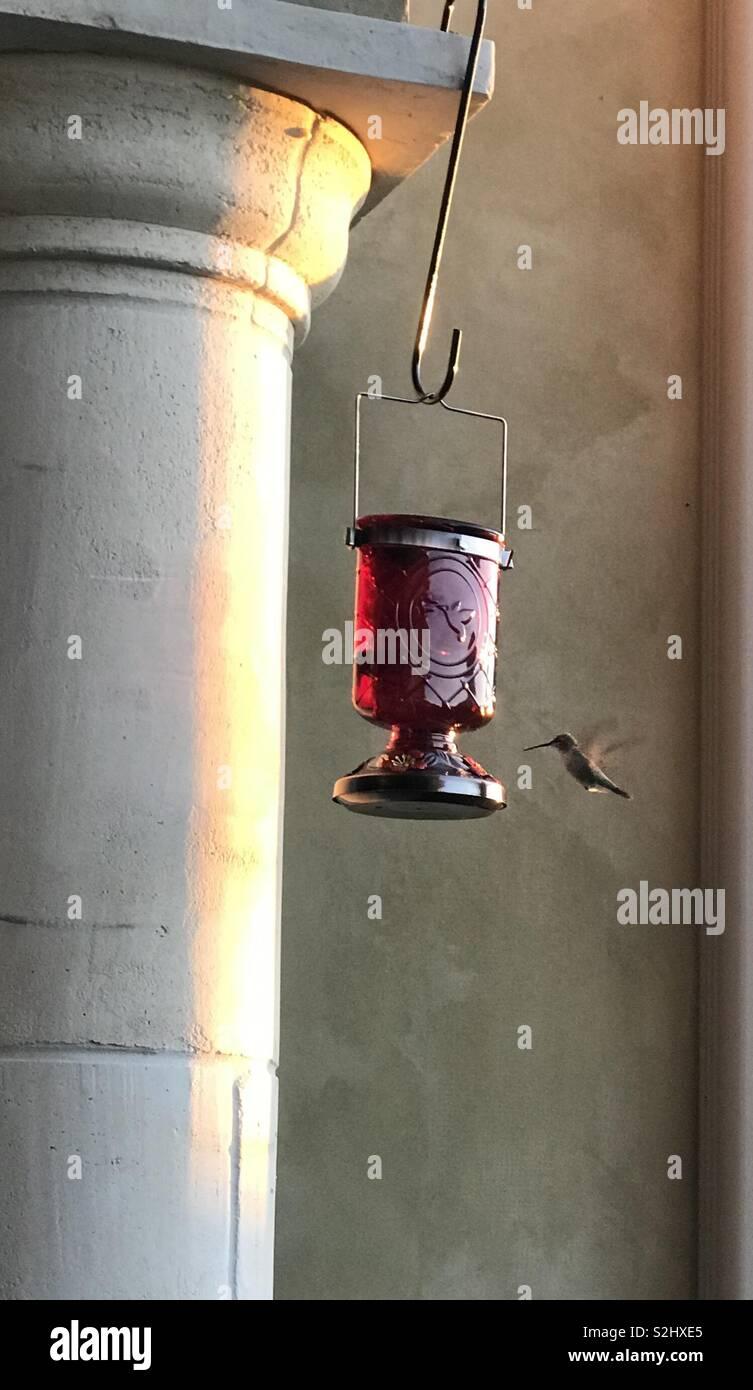 Hummingbird approaching a feeder Stock Photo