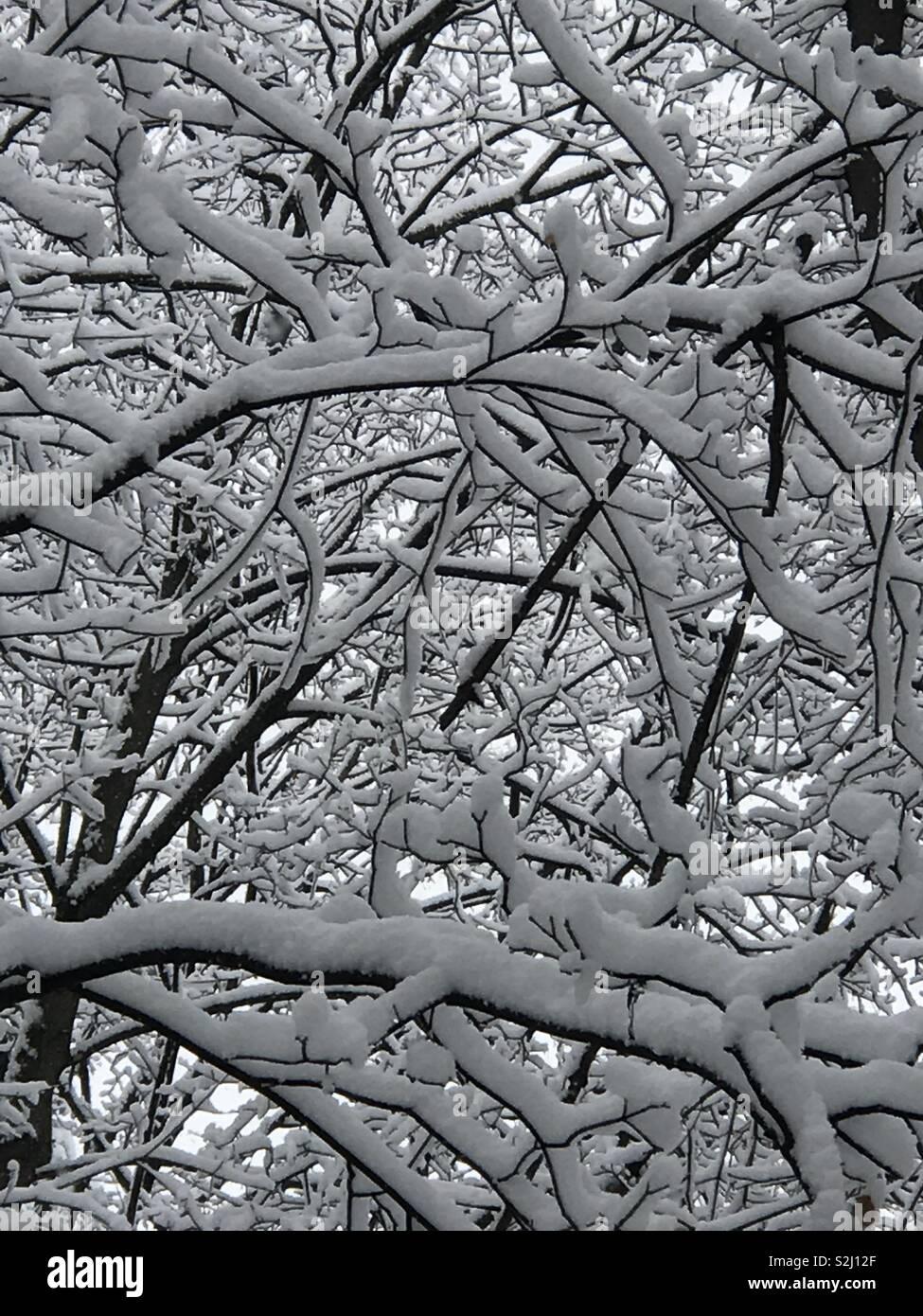 Snow trees - Stock Image