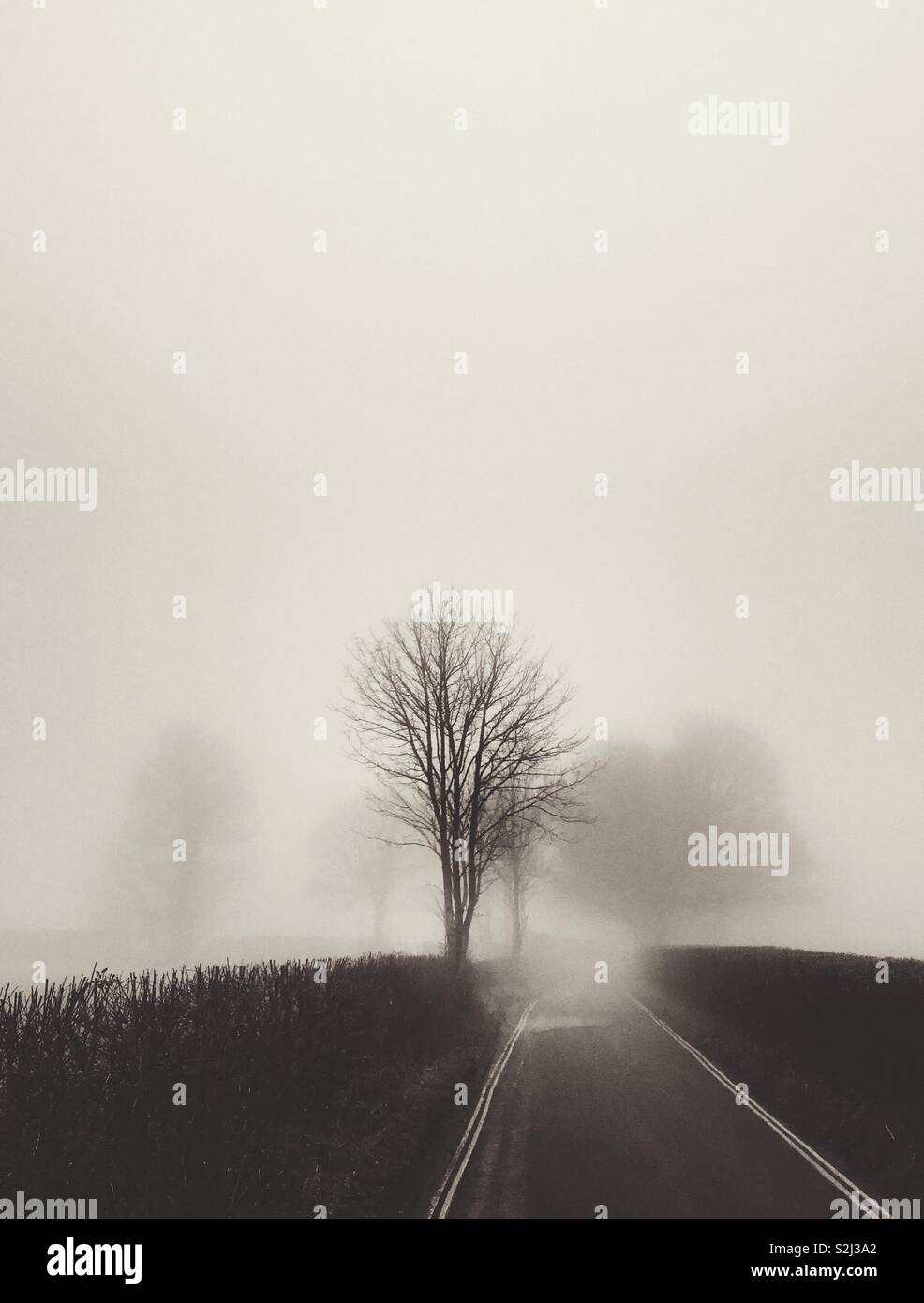 A foggy lane with trees - Stock Image