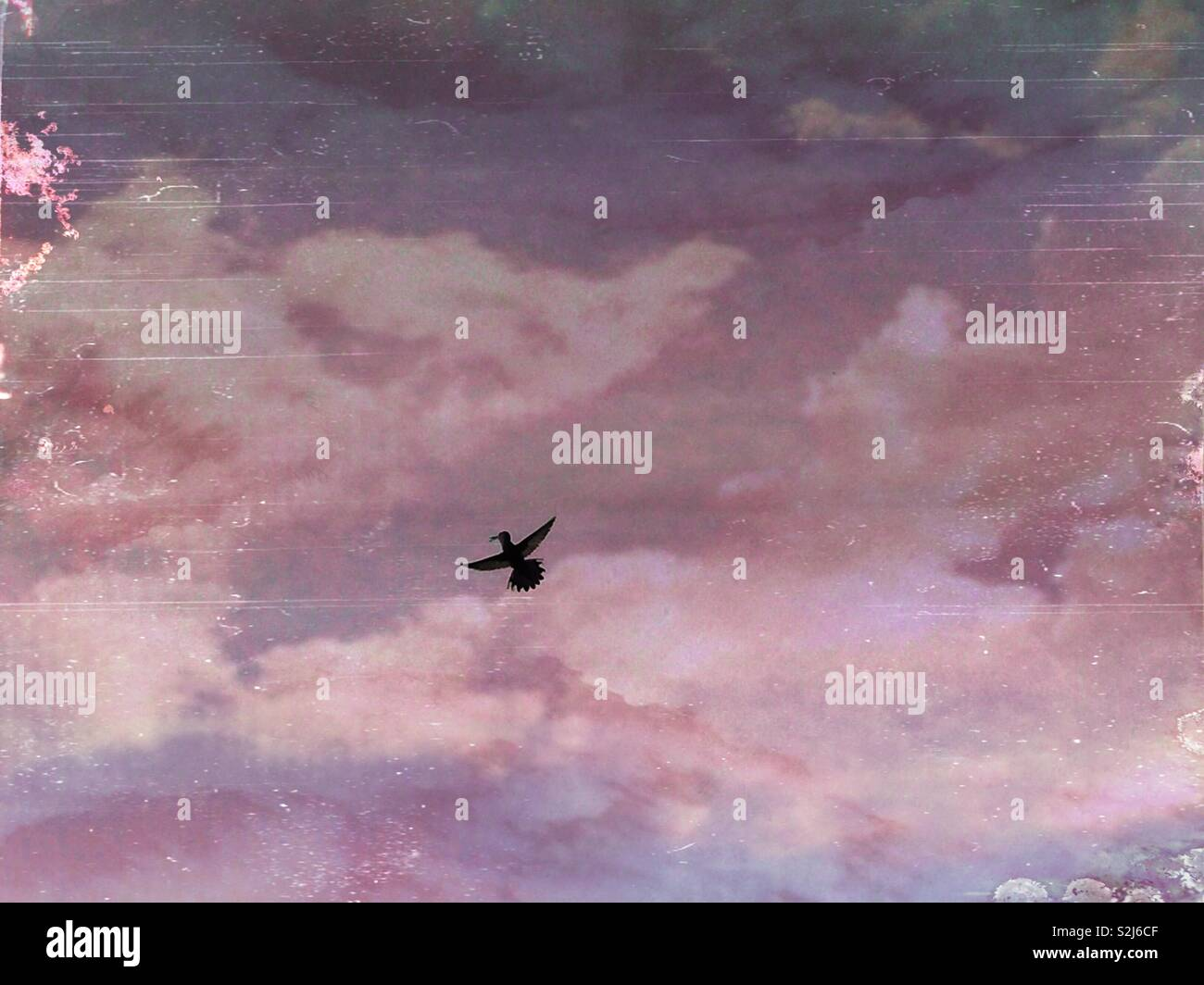 Hummingbird flying in the sky. Artistic sky background. - Stock Image