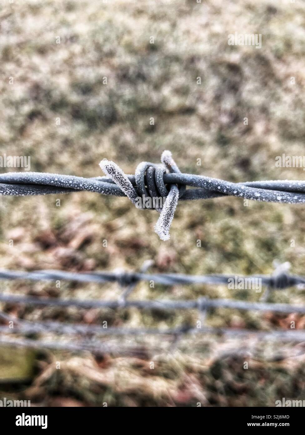 Frosted barb wire - Stock Image