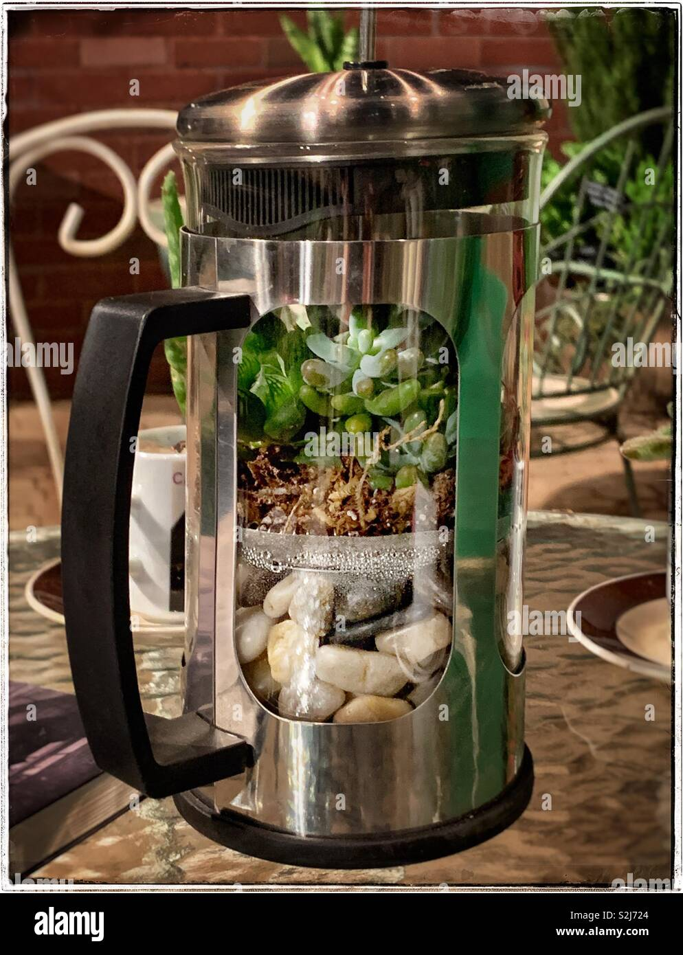 Terrarium With Rocks And Jade Plants Inside A French Press Coffee Maker Stock Photo Alamy
