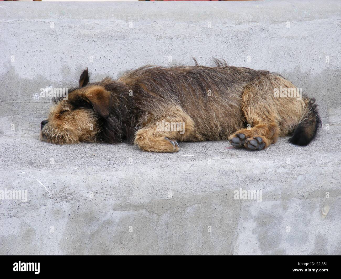 Let Sleeping Dogs Lie Stock Photo