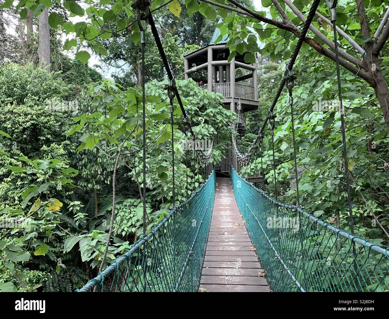 Canopy walk in the jungle Stock Photo