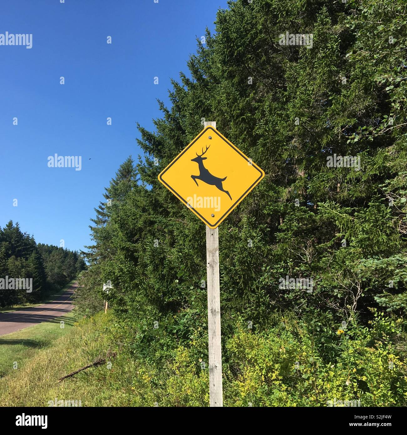 Deer warning road sign in Canada Stock Photo