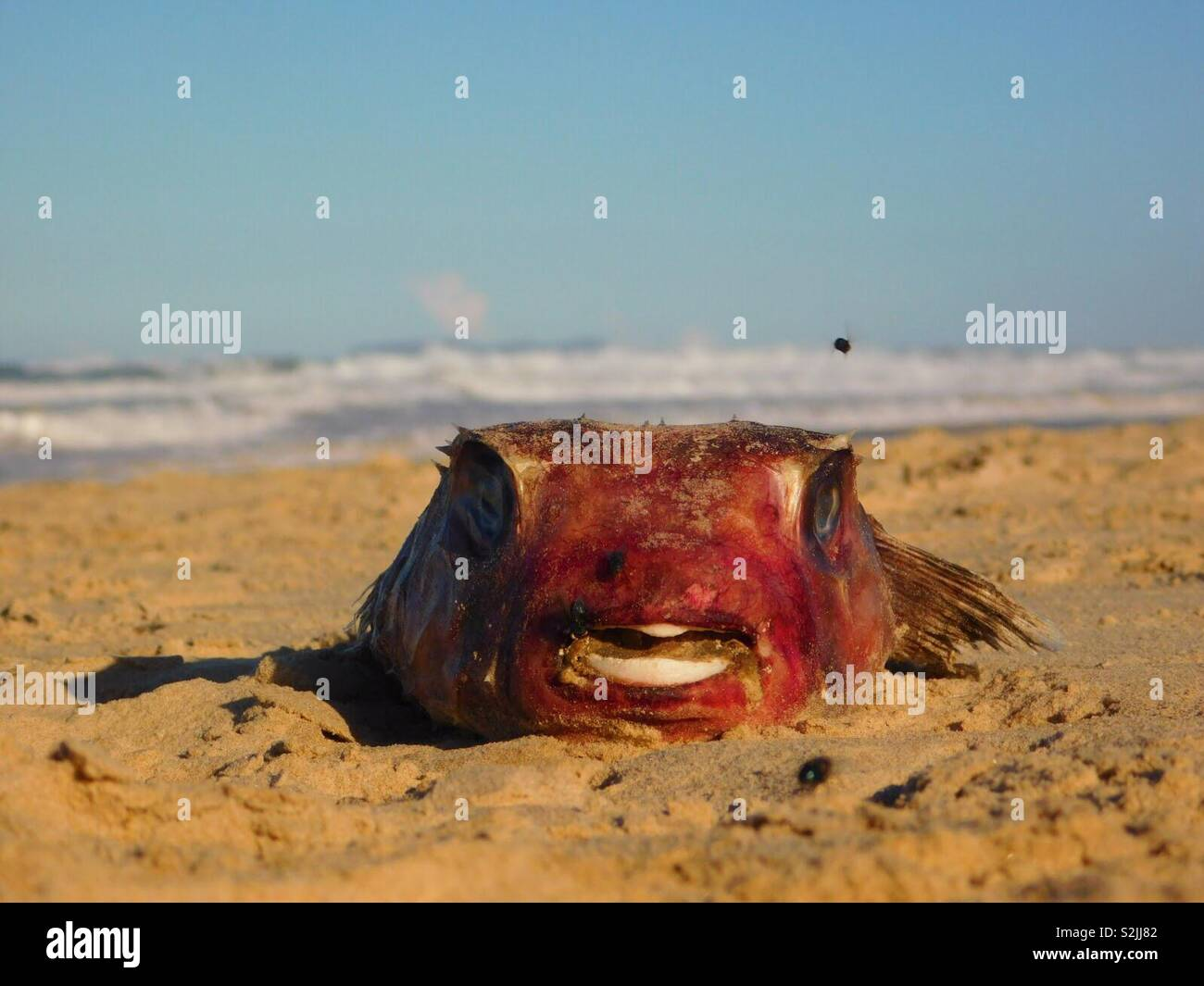 Dead Fly Stock Photos & Dead Fly Stock Images - Page 2 - Alamy