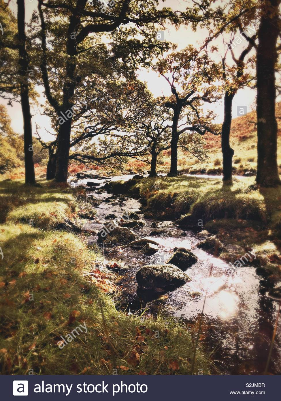 River Erme, Dartmoor - Stock Image