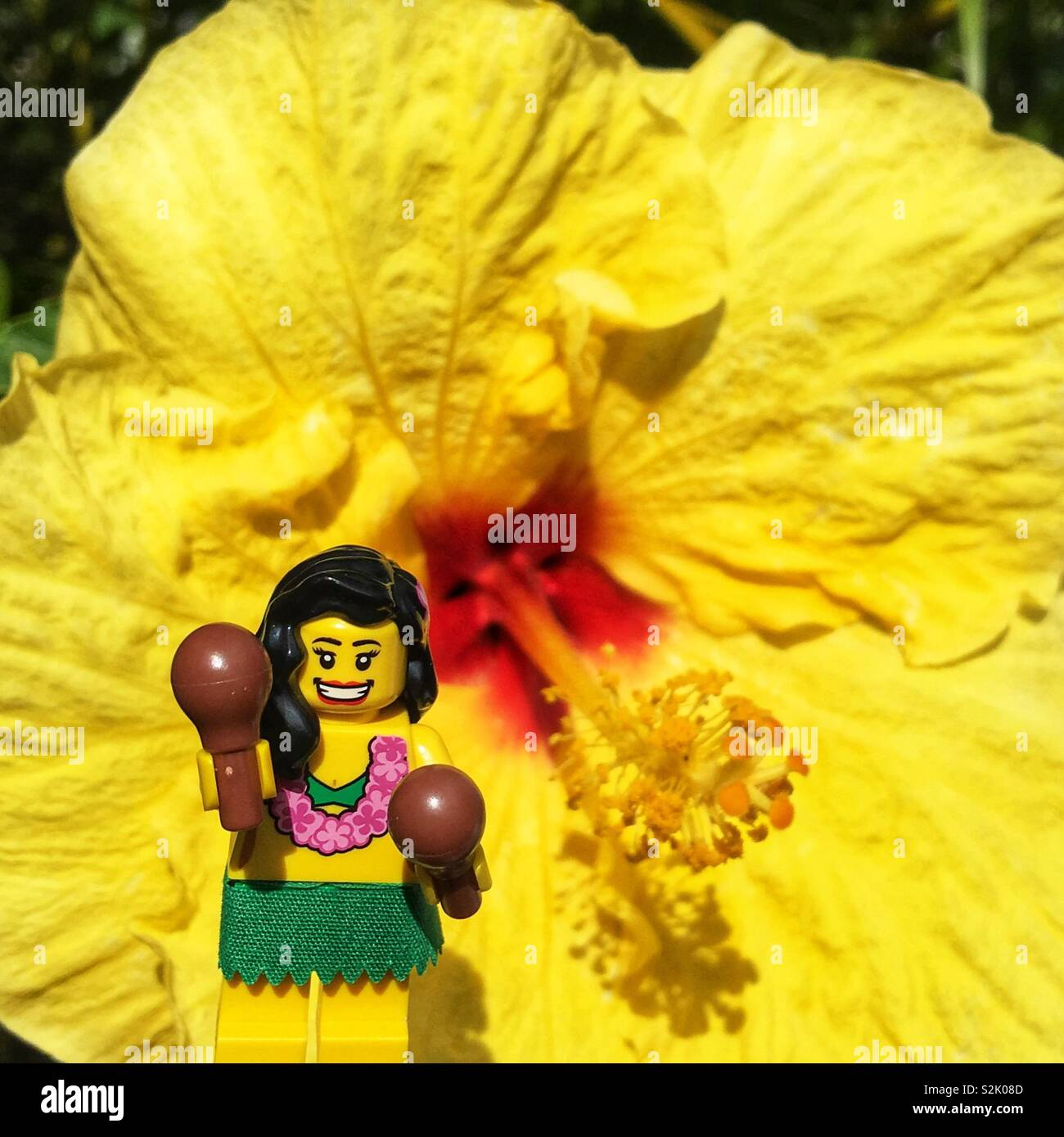 A LEGO hula dancer mini figure in front of a yellow hibiscus flower in Hawaii - Stock Image