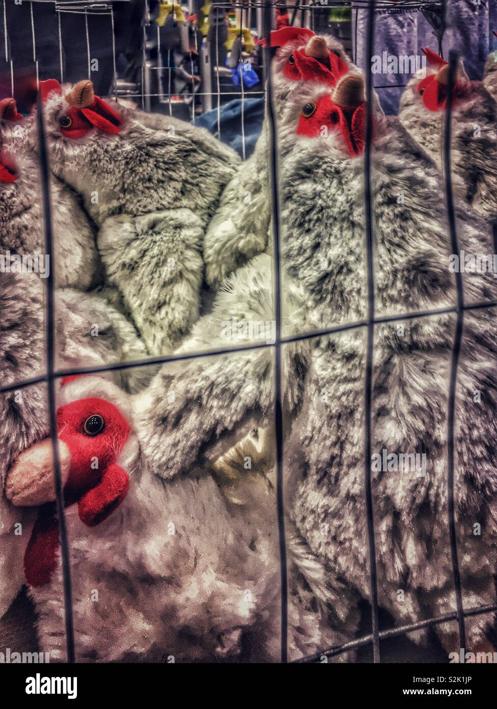 Pretend demonstration showing the unclean and overcrowded living conditions of chickens living in cages on poultry farms by placing too many pretend stuffed animal chickens in a wire cage. - Stock Image