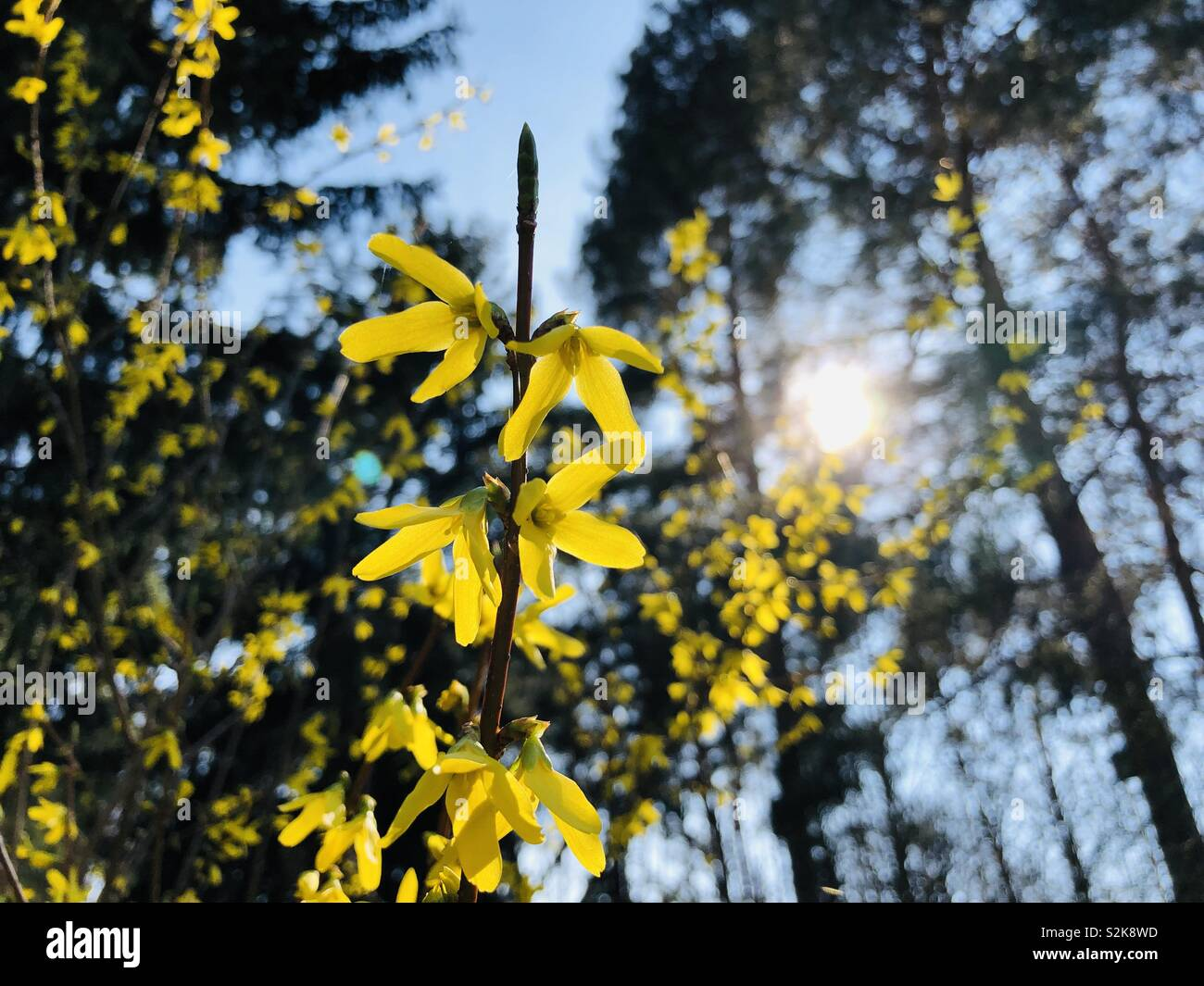 Frühlingsblüher - Stock Image