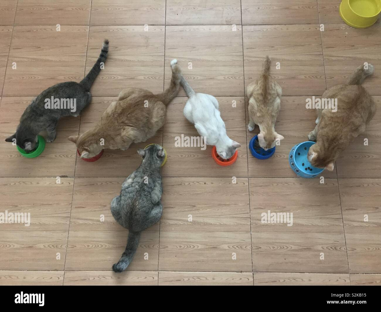 The cat family - Stock Image