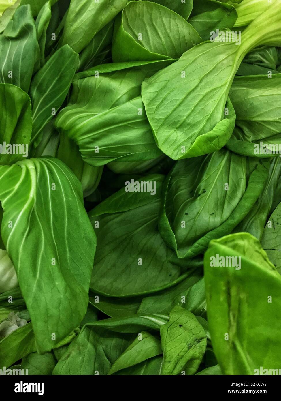 Full frame of fresh delicious ripe green baby bok Choy, pal choi, pok choi, xiǎo bái cài, Shànghǎi qīng, Brassica rapa, Brassica rapa chinensis. Pak choi - Stock Image