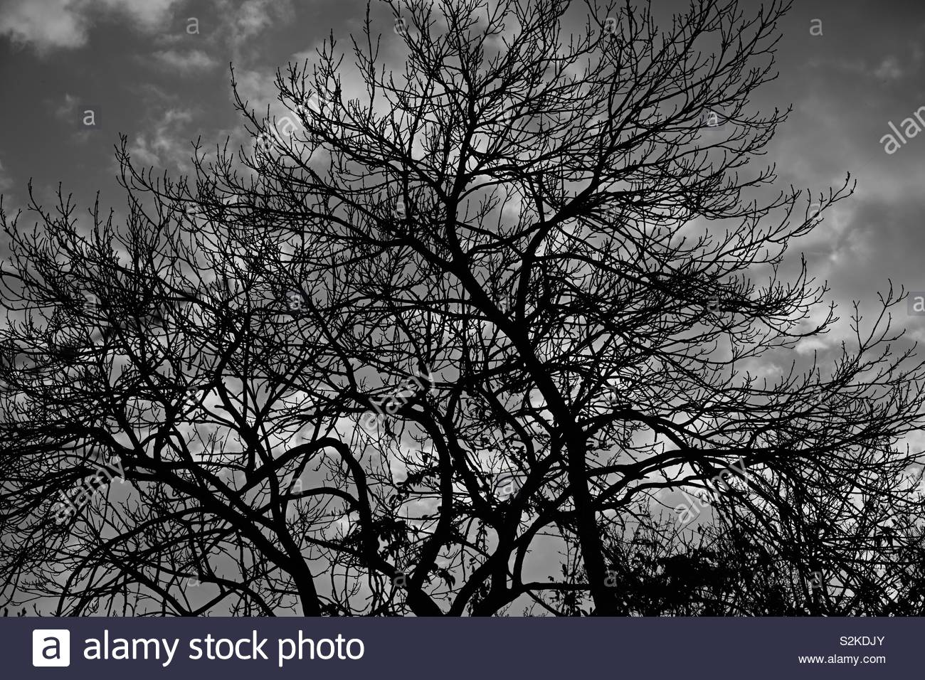 Black and white image of a leafless tree against the sky. - Stock Image