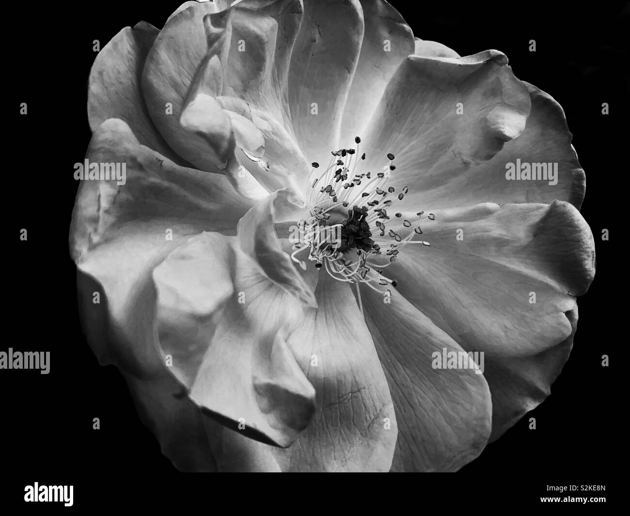 What Is Your Definition Of Beauty Stock Photo 311444245 Alamy