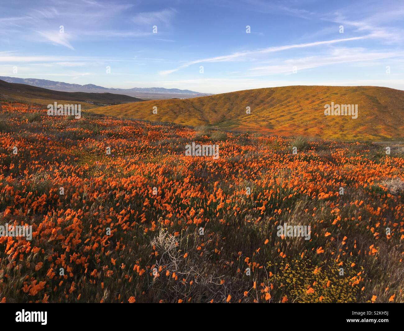 Superbloom in Antelope Valley California Poppy Reserve - Stock Image