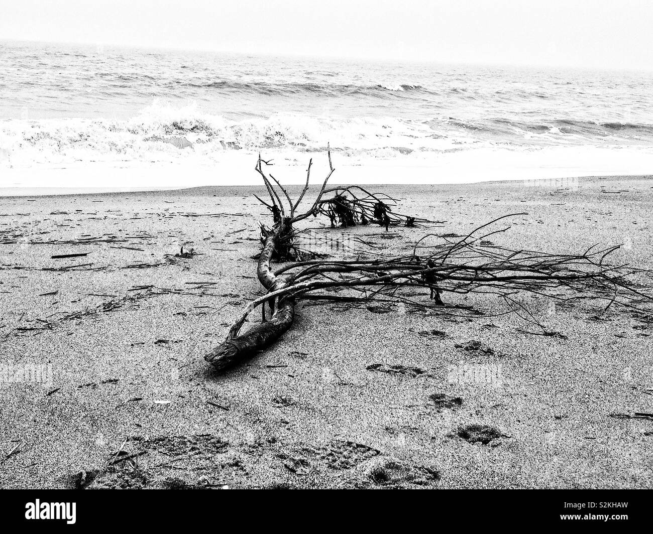 Driftwood on a deserted winter beach. - Stock Image