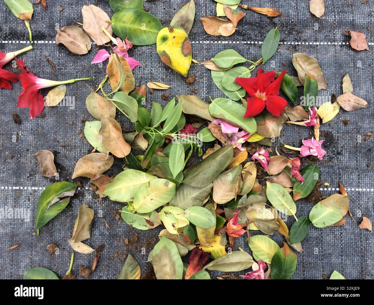 Dying Leaves Stock Photos Dying Leaves Stock Images Alamy