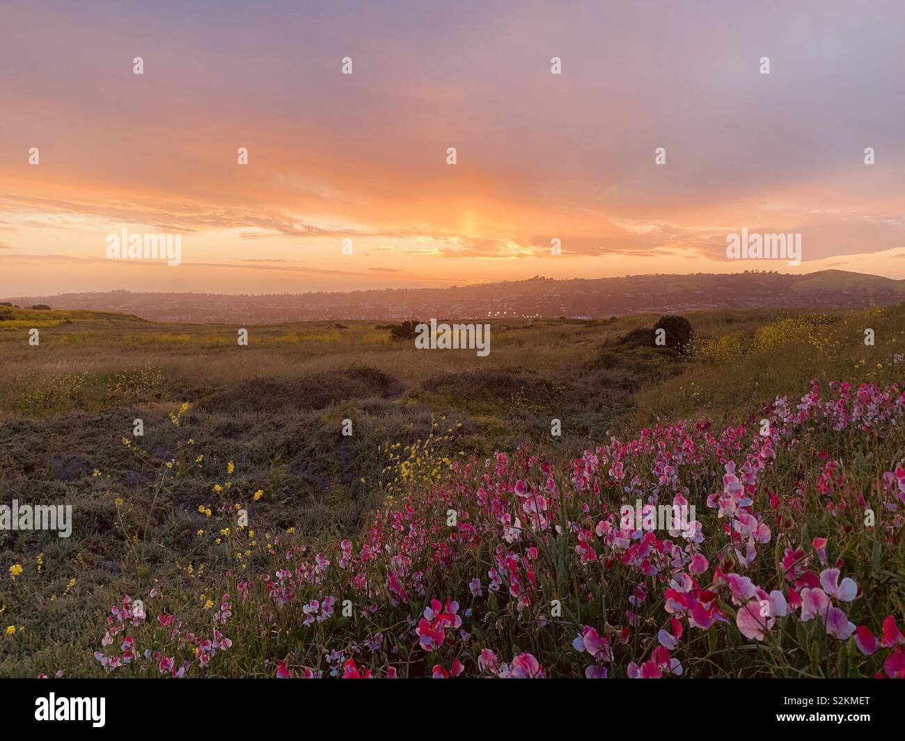 A colorful sunset sky over a  Blooming wildflower field in San Juan Capistrano in  Southern California: - Stock Image