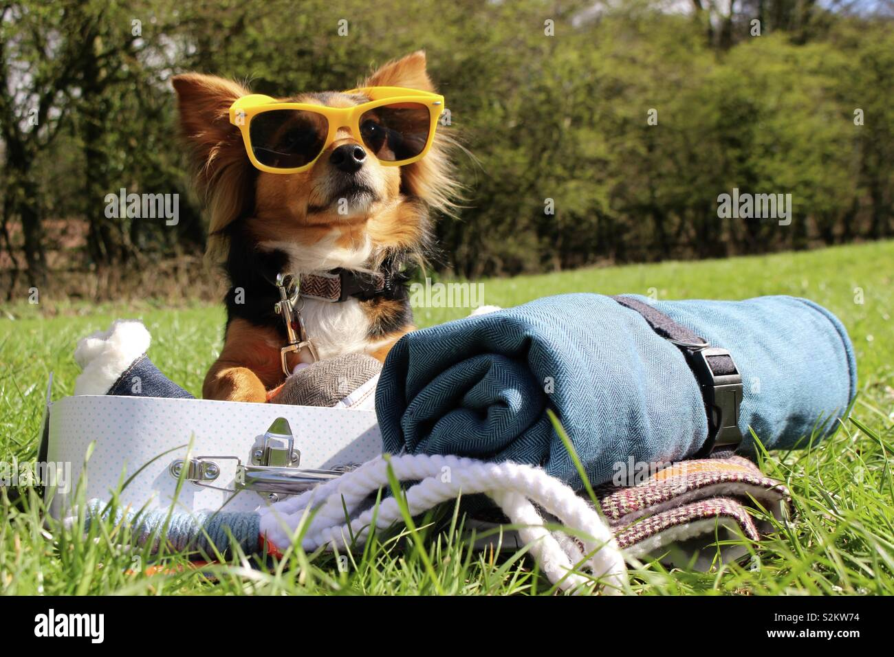 Summer dog with sunglasses and suitcase Stock Photo