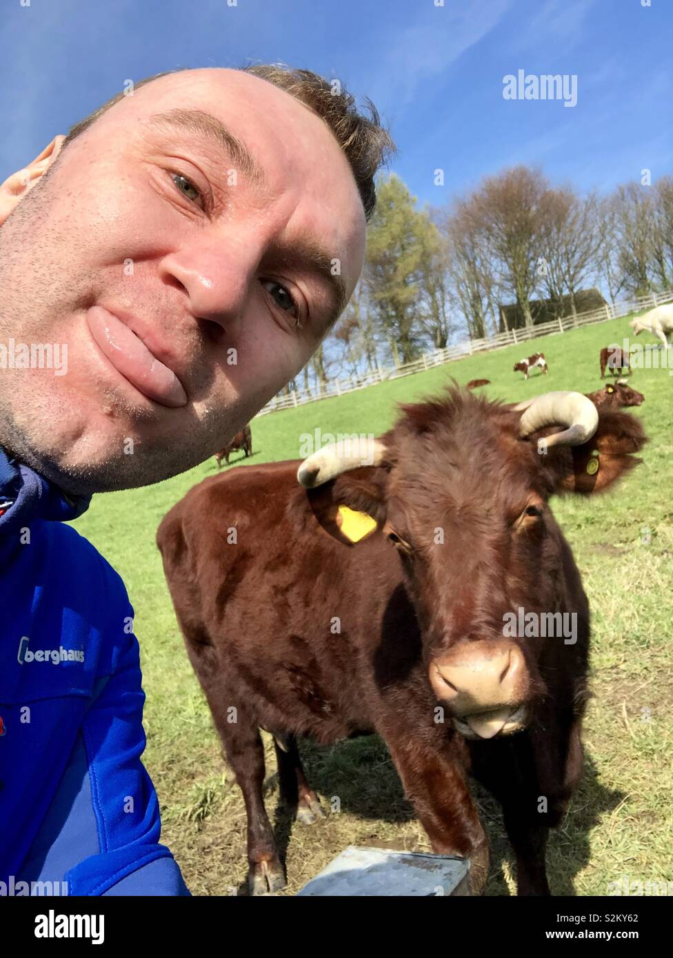 A cow selfie and I - Stock Image
