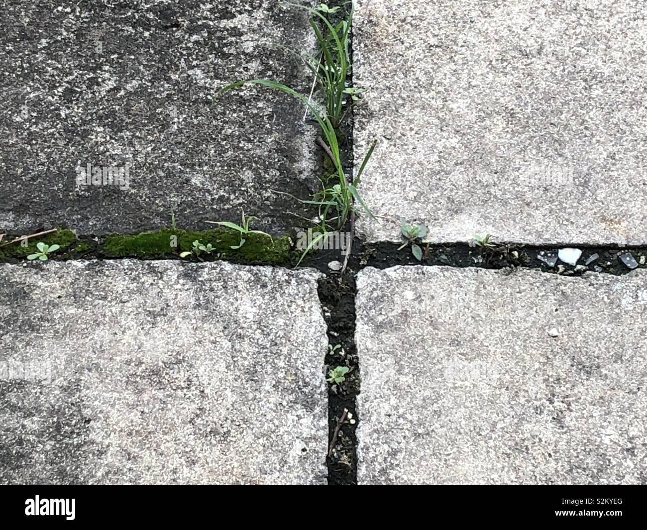 Textura cimento com grama no meio - Stock Image