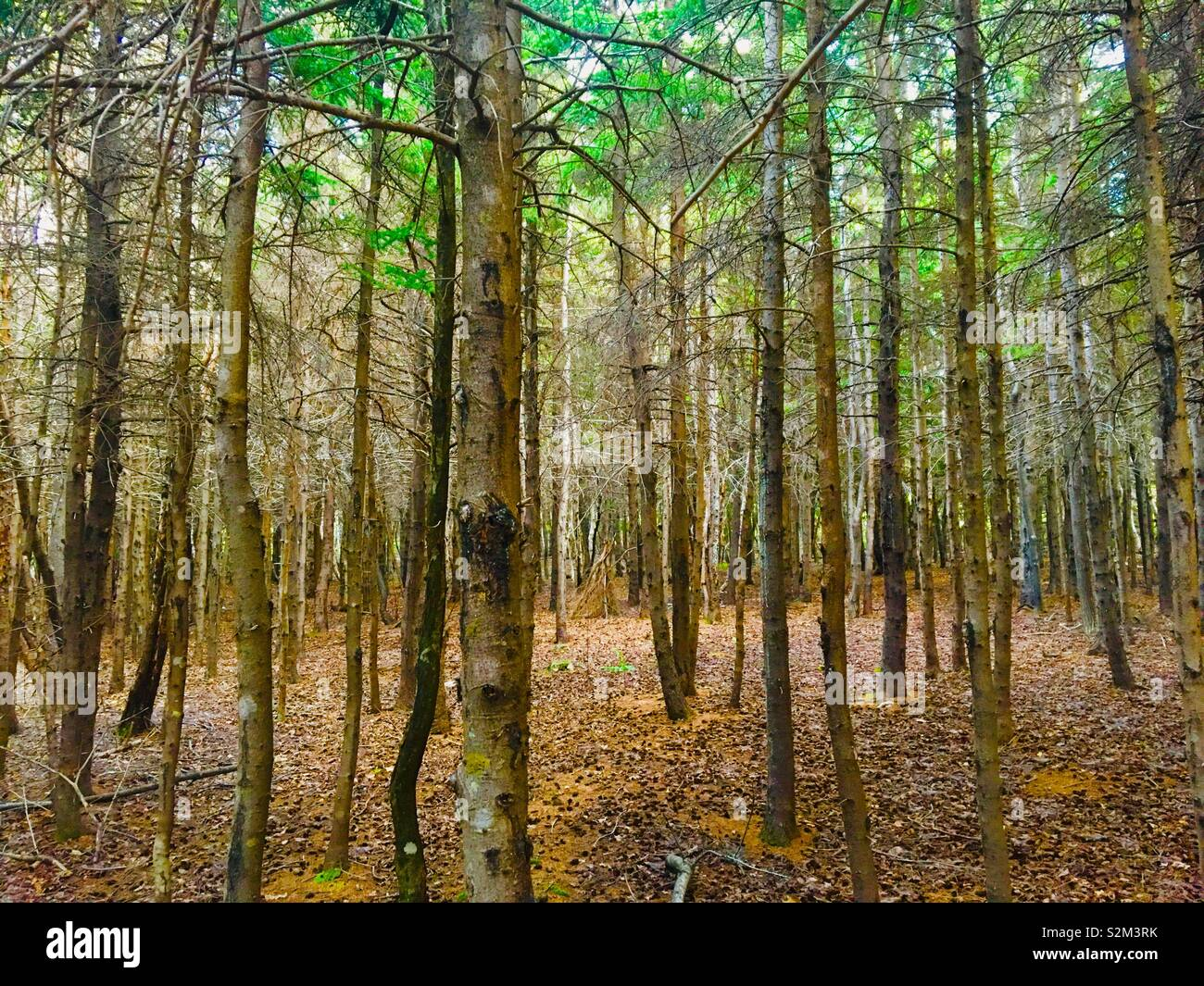 Forest woodlands Stock Photo