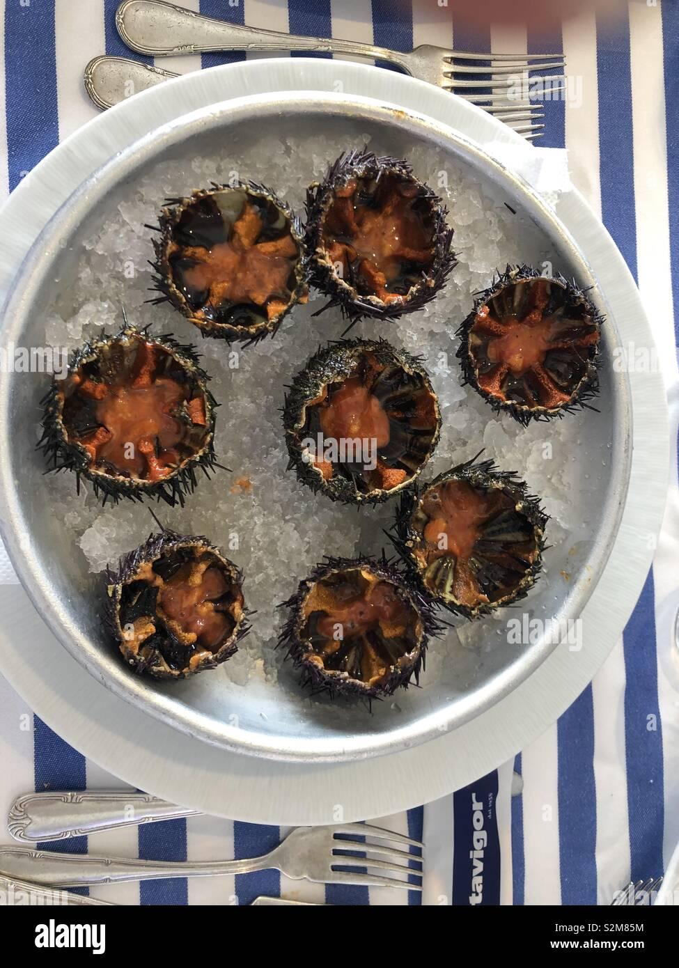 Sea urchins Ricci crudi gourmet meal dish restaurant lifestyle high end luxury living Stock Photo