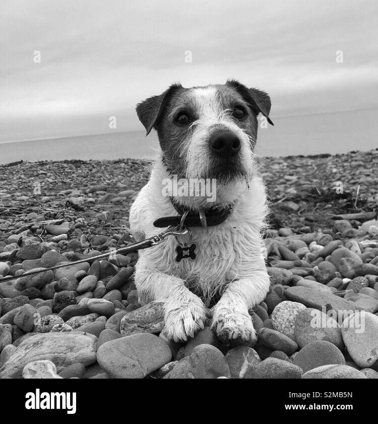 Looking for a treat ! - Stock Image