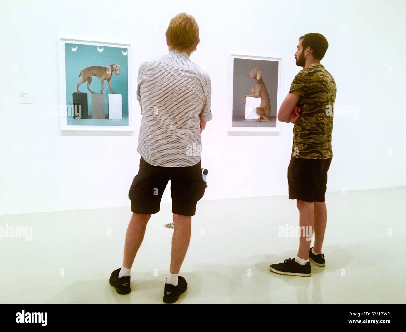 Guys looking at William Wegman's dog portraits in art gallery Stock Photo