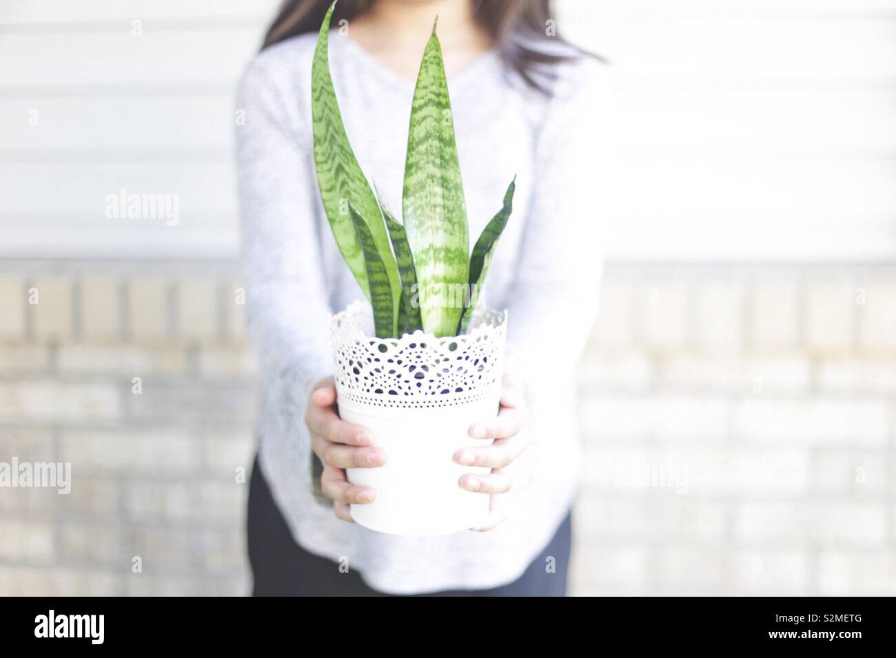 Girl holding a snake plant Stock Photo