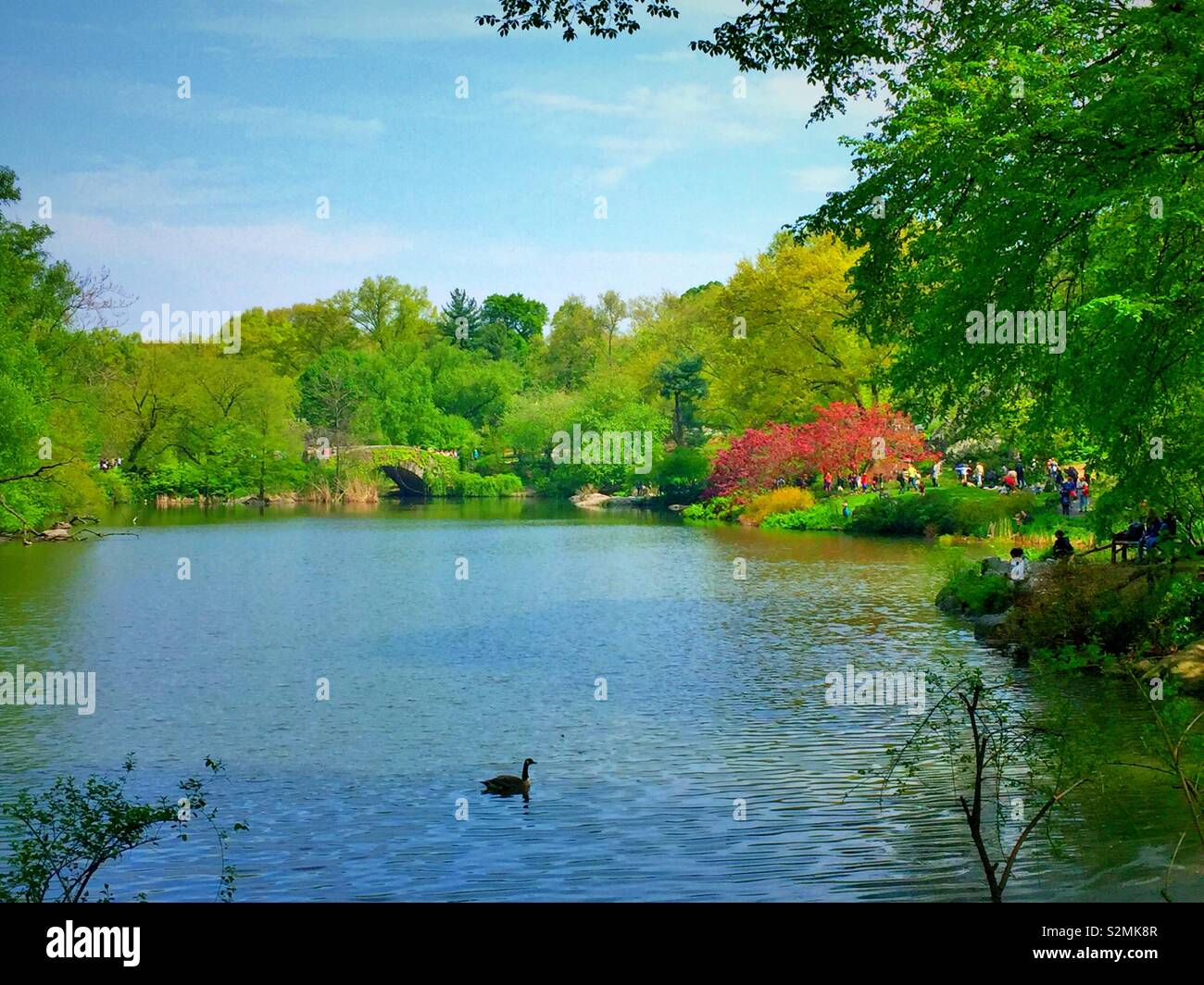 The pond and gapstow bridge looks beautiful and bright, Central Park, NYC, USA - Stock Image