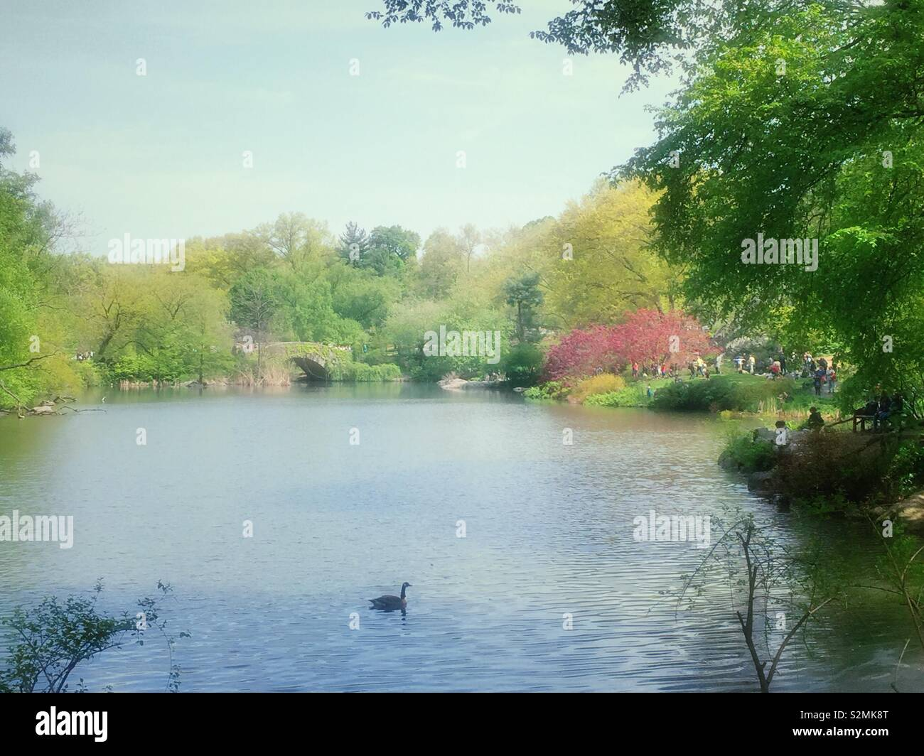 The pond and Gapstow bridge, Central Park in the spring, NYC, USA - Stock Image