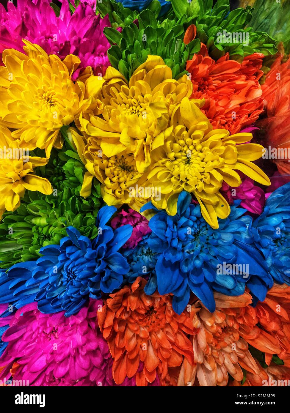 Spring Flower Bouquet Of Brightly Colored Yellow Blue Orange And Pink Carnations Stock Photo Alamy