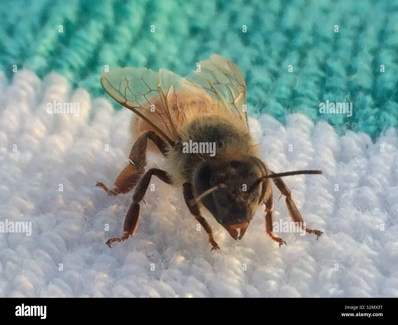 Close-up of a bee Stock Photo
