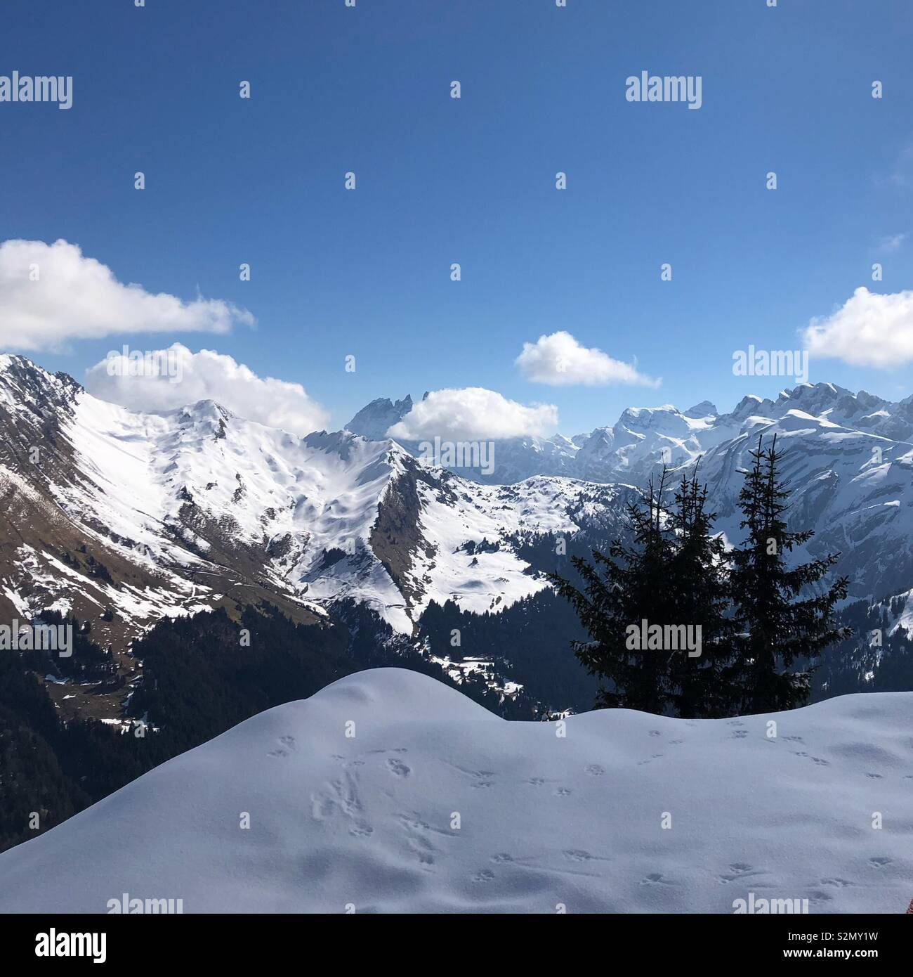 Animal tracks at the peak of a snow covered mountain - Stock Image