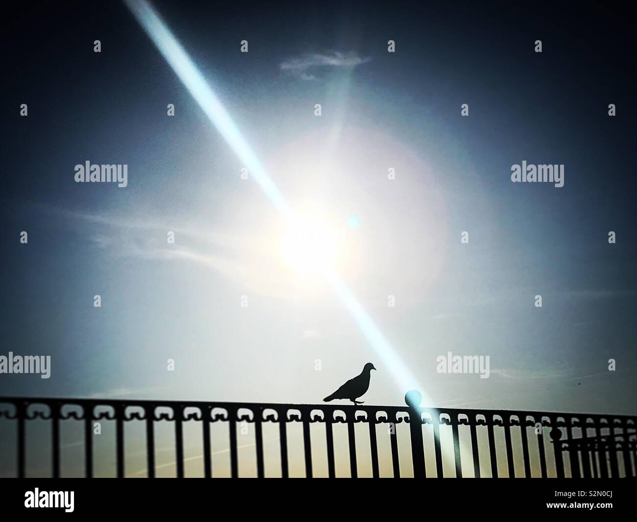 Sun shines as a dove perches in a metal bars wall in Grazalema, Cadiz, Andalucia, Spain - Stock Image