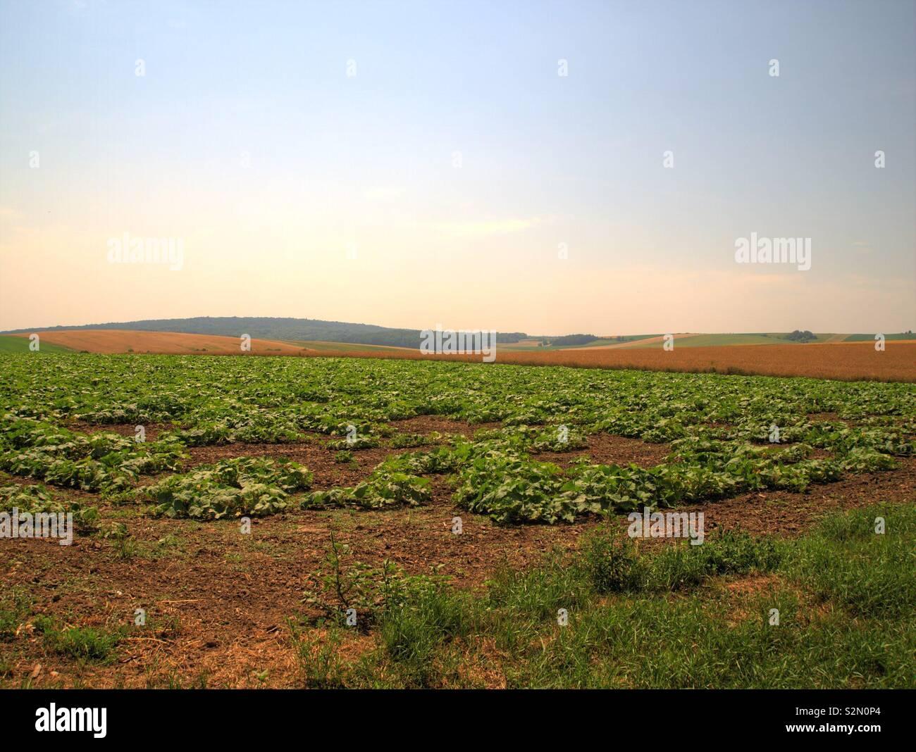 Felder im Weinviertel, hdr Stock Photo