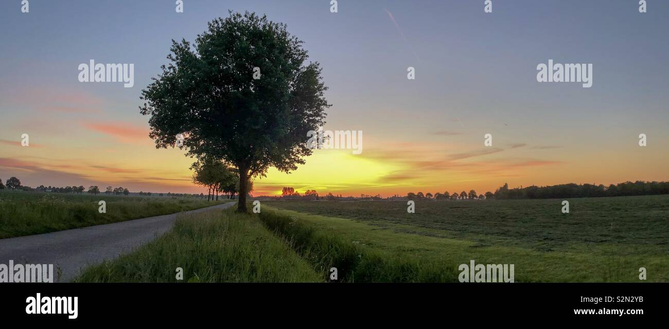 Trees among a road between the fields in a rural environment against a colorful and idyllic sunrise dawning sky - Stock Image