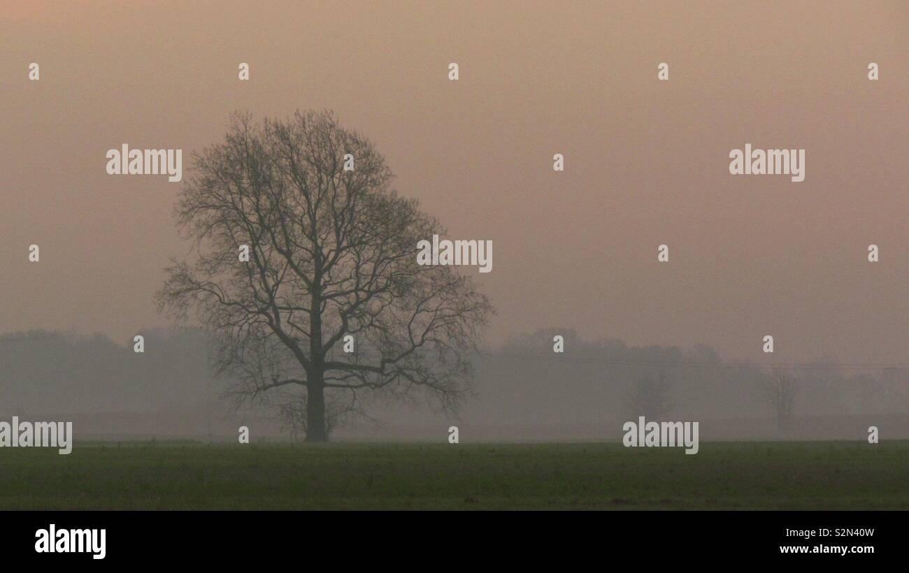 Tree among the early morning fog - Stock Image