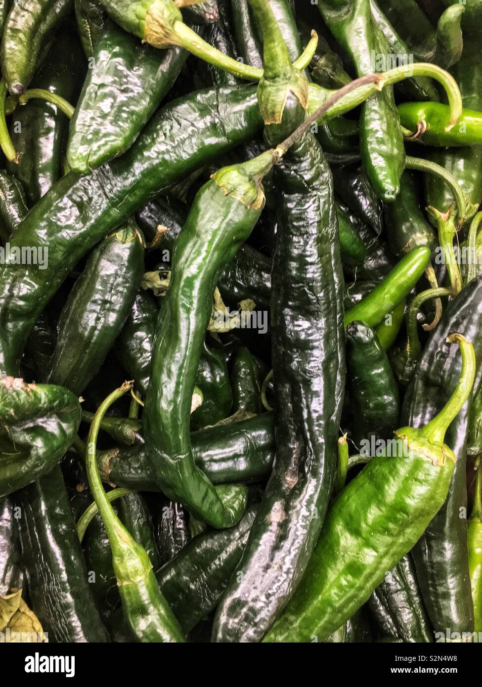 Full frame of fresh green poblano peppers piled high at the local produce market. Stock Photo