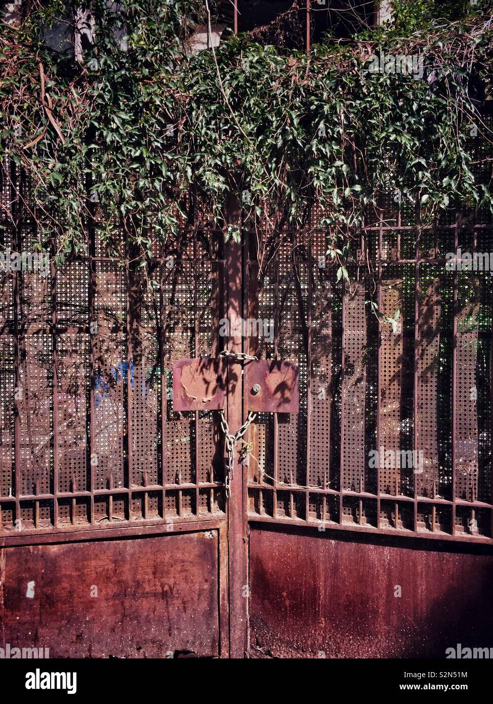 Overgrown plants covering abandoned gate - Stock Image