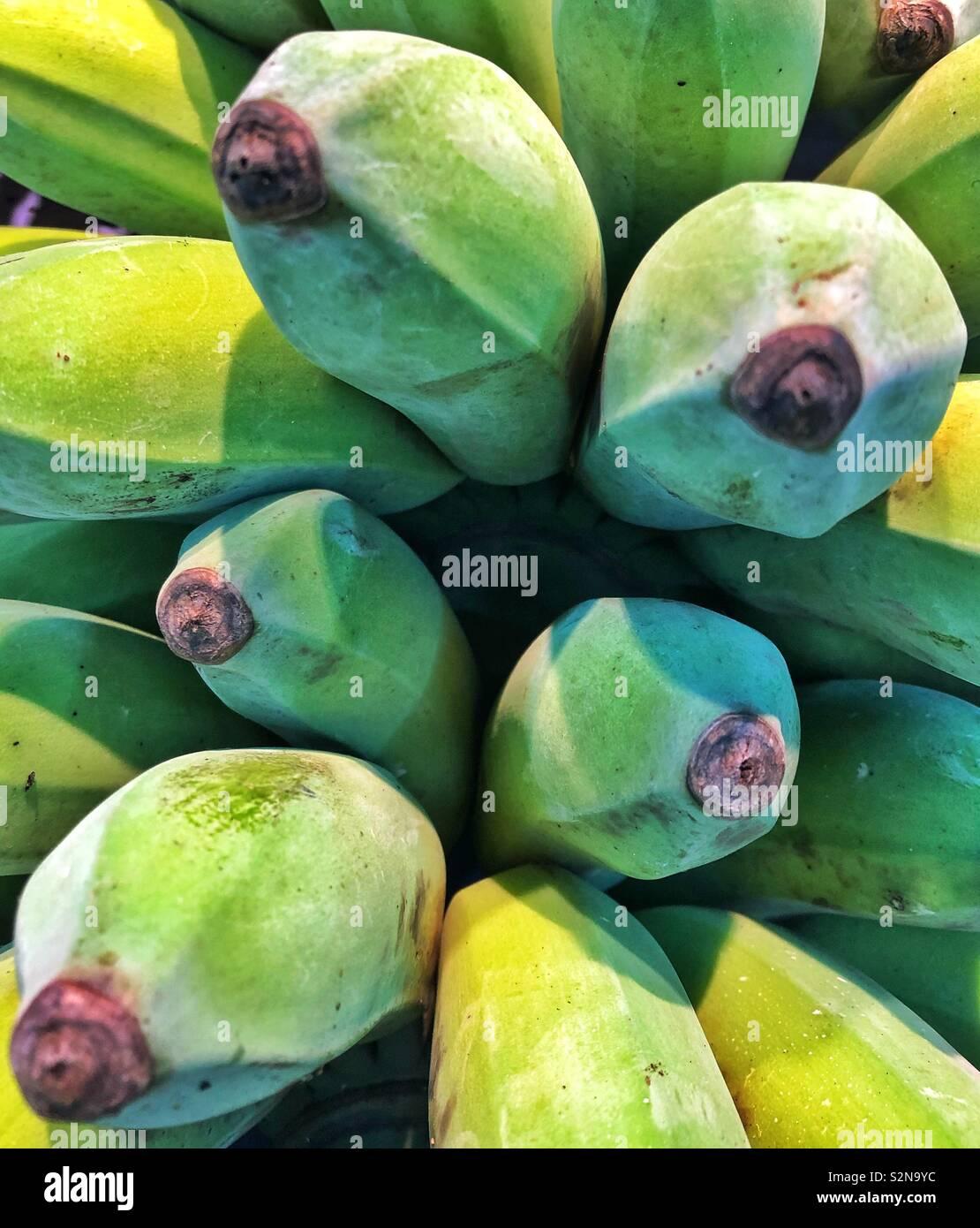 Green bananas close up - Stock Image