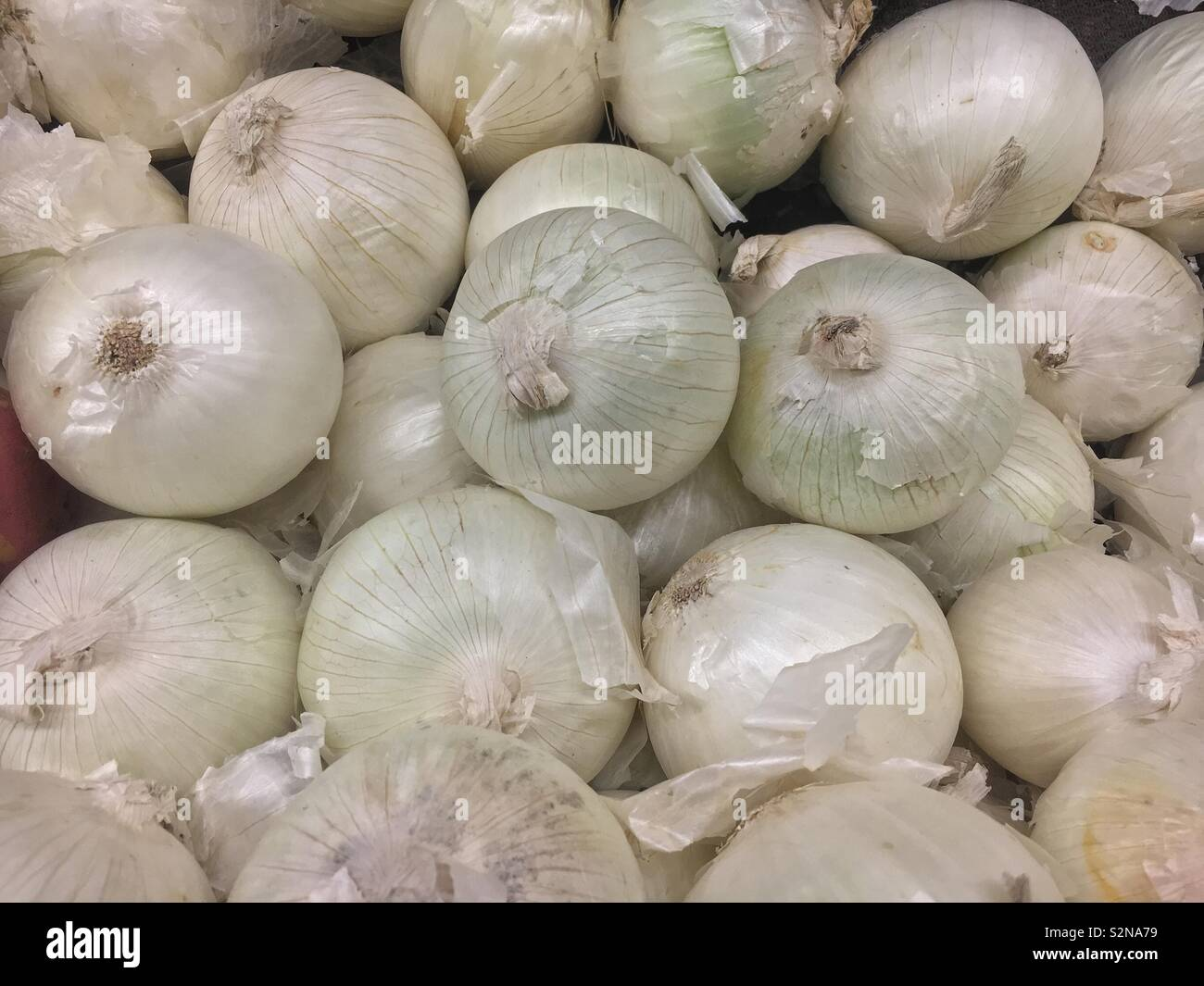 Raw white onions on display and for sale at the local produce market. - Stock Image