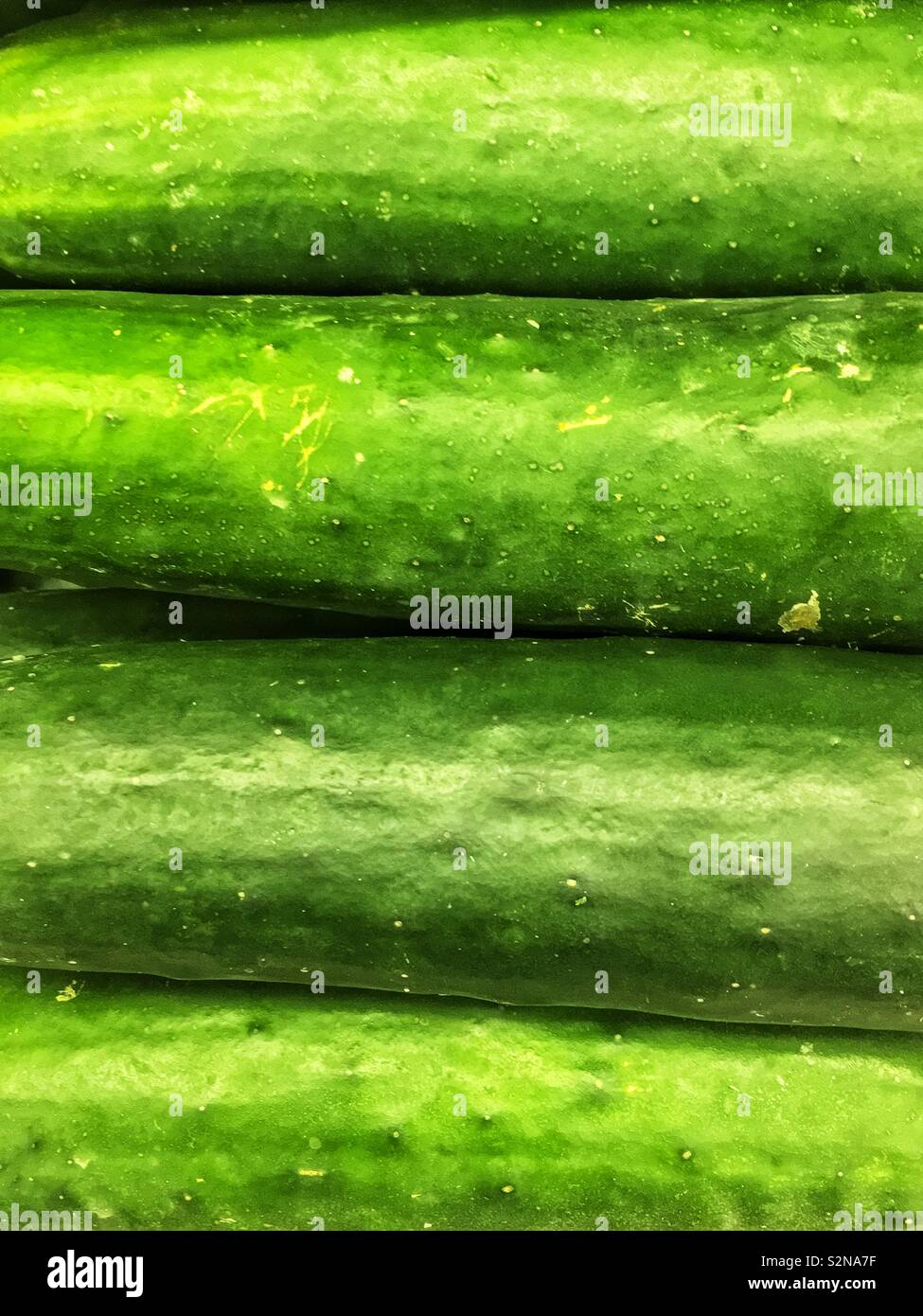 Full frame closeup of four fresh tasty green cucumbers on display and for sale at the local produce market. - Stock Image