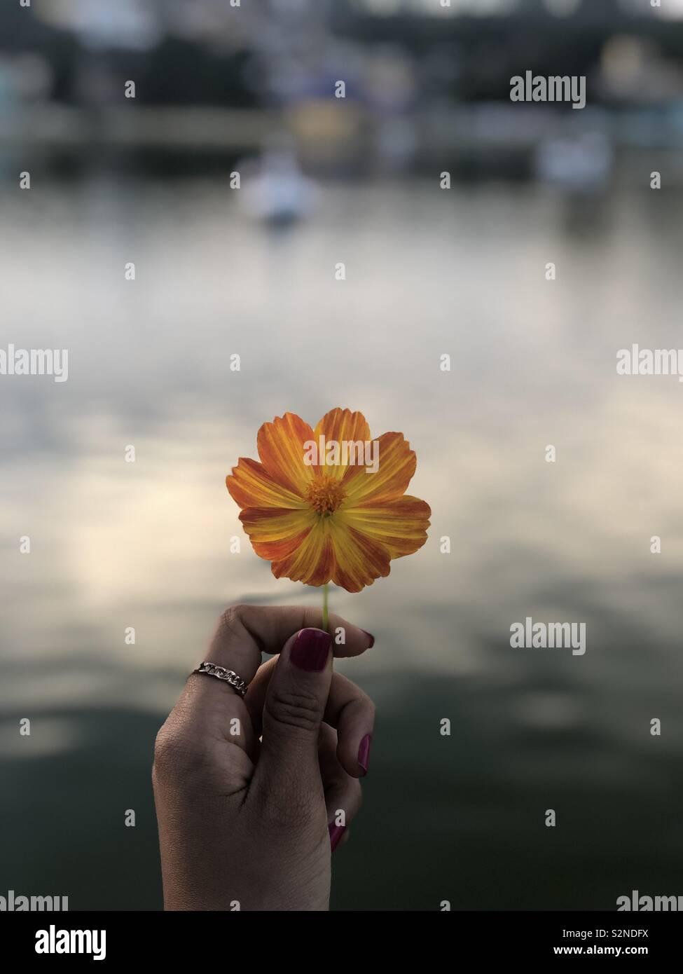 Natureza refletida nas cores de uma flor Stock Photo