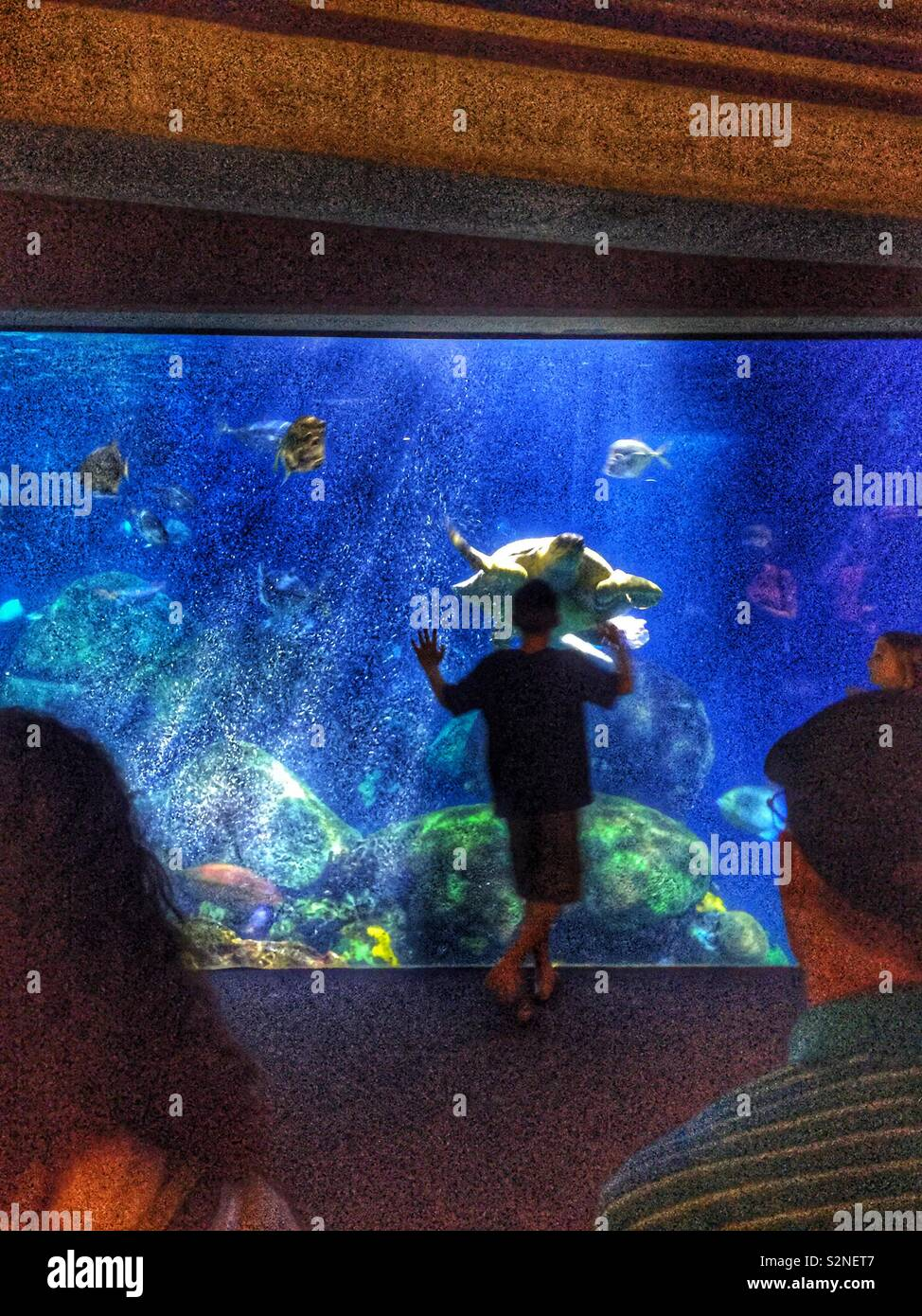 Get close (photo of people having a close encounter with a giant sea turtle at the Chattanooga Aquarium in Tennessee) - Stock Image