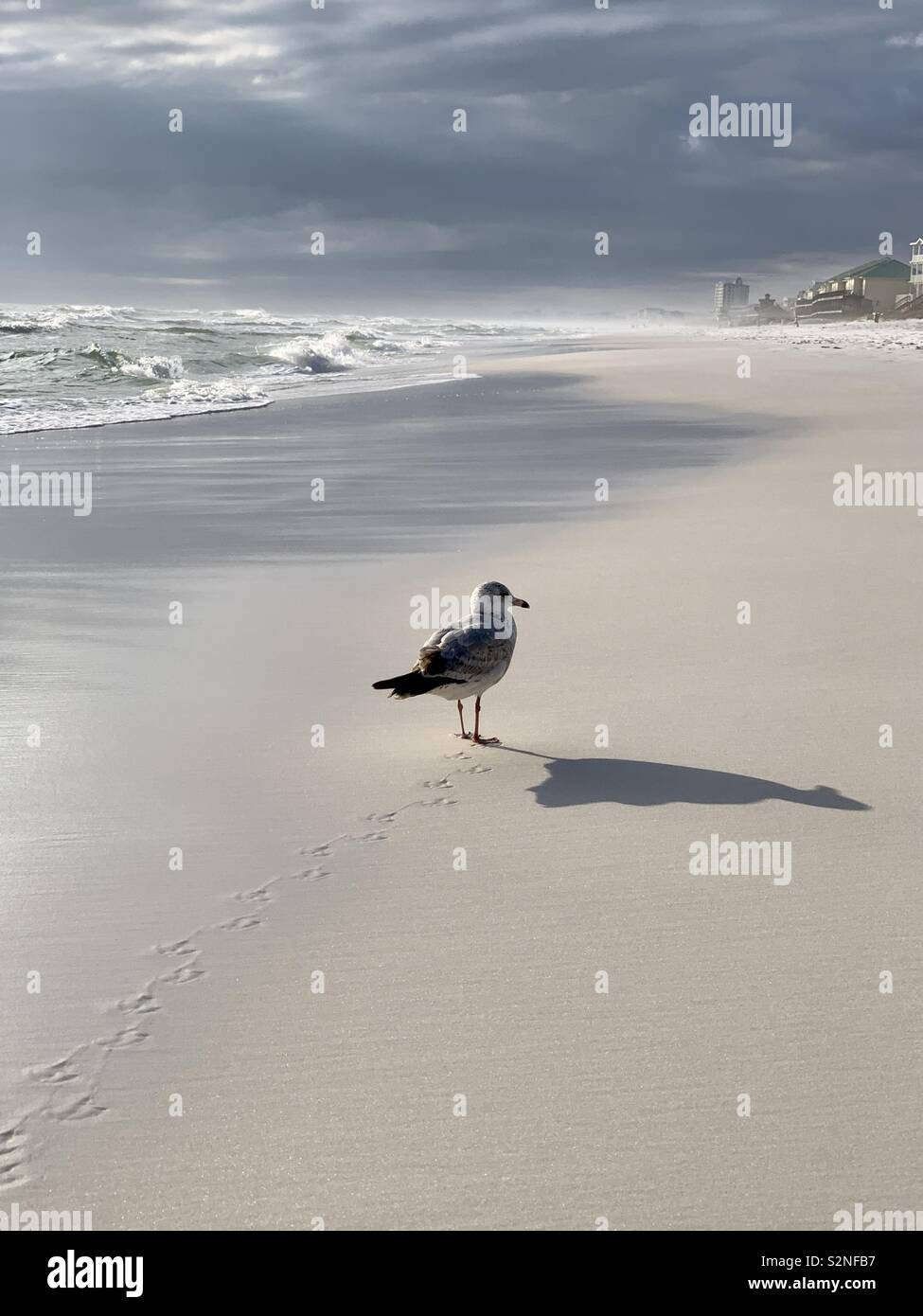 Gull walking on beach on a stormy day with shadow, waves, clouds Stock Photo