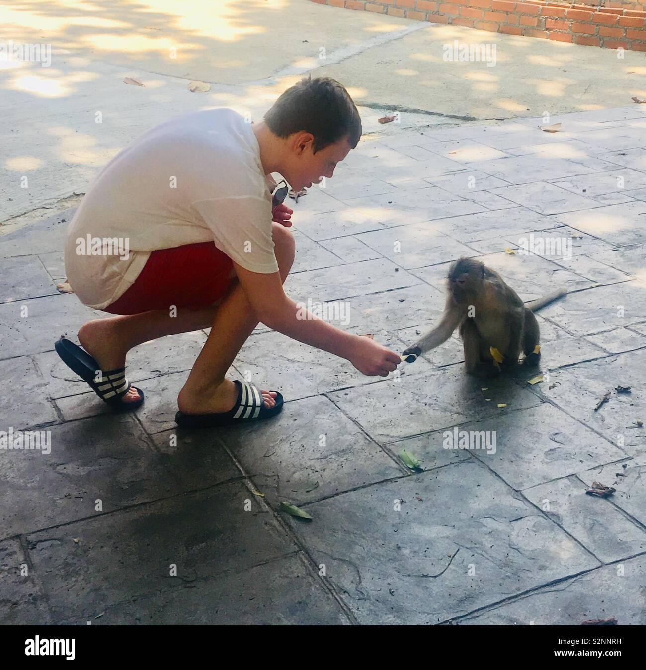 Monkey friendships - Stock Image