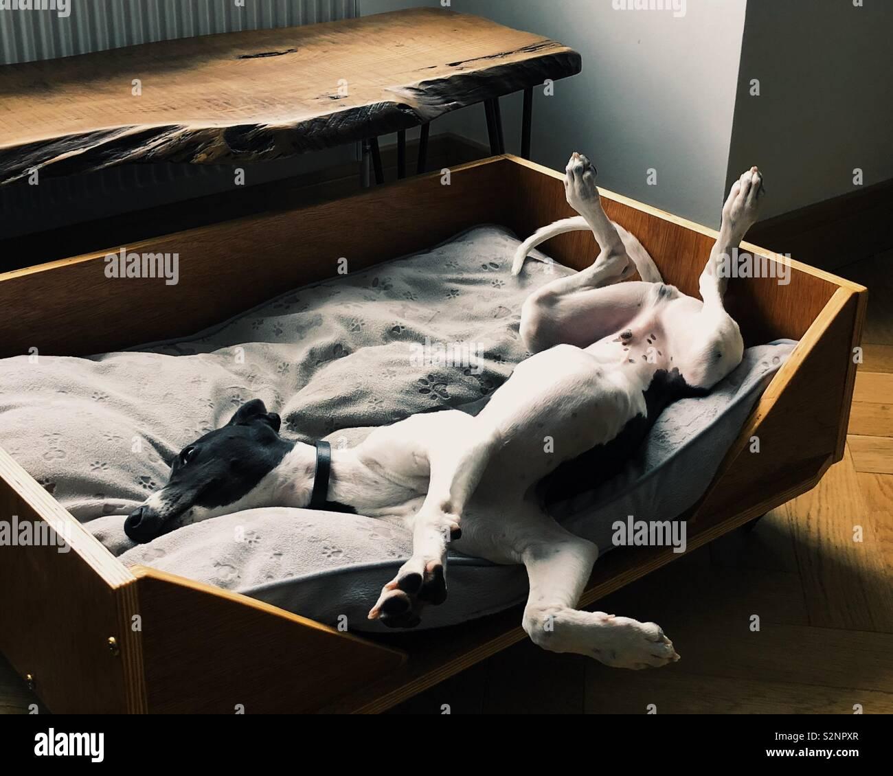 Lazy Sundays Stock Photo
