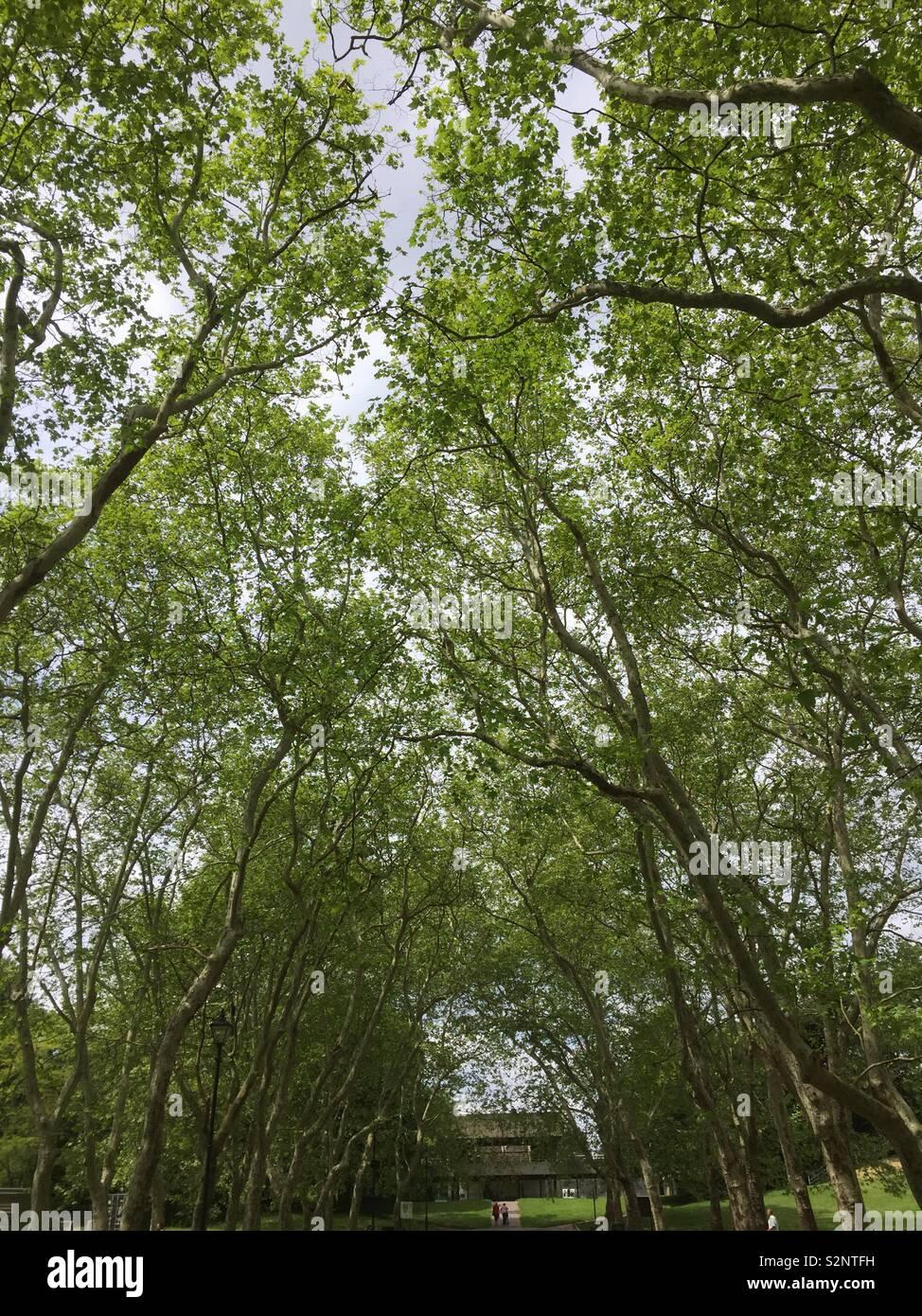 Crystal Palace Park trees May 2919 canopy green Stock Photo
